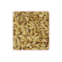 Paddy - Reis  20 kg